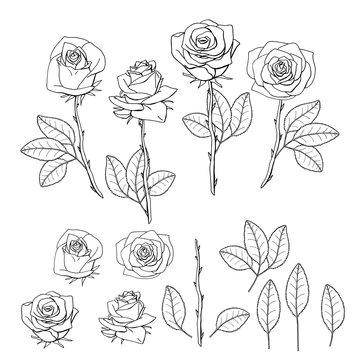 hand drawn rose flower. floral design element