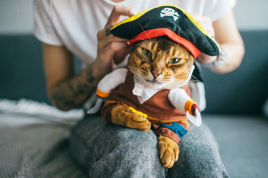 Lovely kitten in pirate costume. Funny cat in mask. Pet clothes concept.