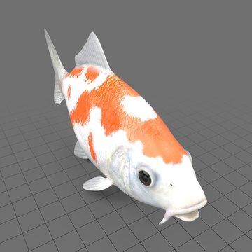 Orange koi carp