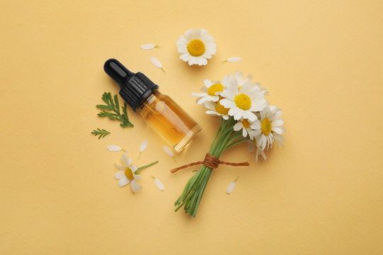Flat lay composition with chamomile flowers and cosmetic bottle of essential oil on color background