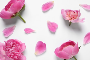 Beautiful peony flowers on white background, top view
