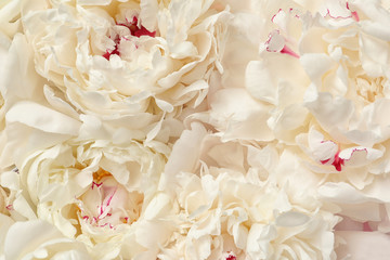 Foto op Canvas Lelie Beautiful fresh peony flowers as background, top view