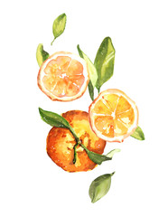 Watercolor hand drawn fresh juicy oranges and leaves composition illustration isolated on white background