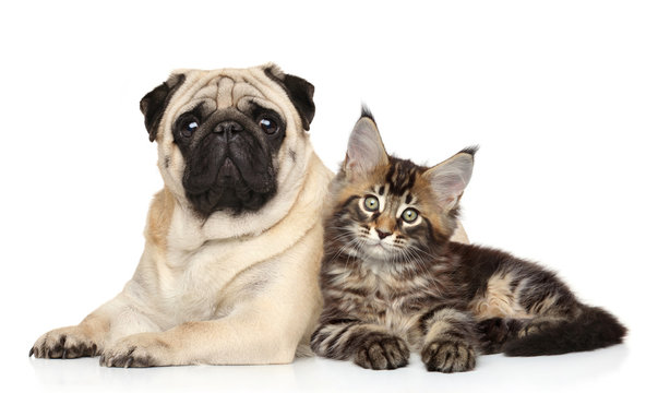 Cat and dog together lying on white