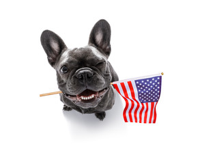 Poster Crazy dog independence day 4th of july dog
