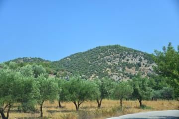 Wall Mural - Olivenbäume auf der Ferieninsel Rhodos / Griechenland