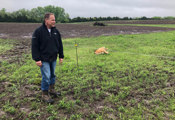 Entrepreneur Rick Gash, founder and CEO of the Hemp Development Group LLC, surveys a field where he plans to grow industrial hemp near his home in Augusta, Kansas