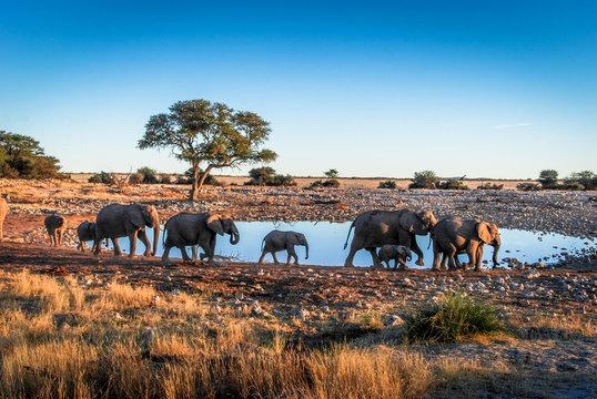 Baby elephant at a waterhole, in Etosha National Park, Namibia, Africa