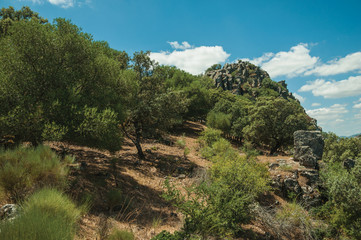 Leafy trees and dry bushes on a rocky hill slope