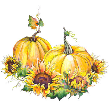 Autumn pumpkins and sunflowers. Watercolor illustration. Isolated on white background.