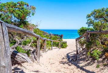 path towards the sea through the beach