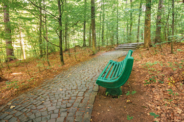 bench near the stone path in forest. beautiful nature scenery. green foliage on trees in summer time. take a rest in the shade