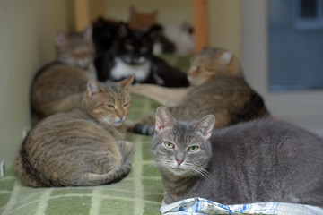 cats together lies in an animal shelter