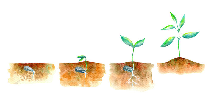 Sprout in the ground.Spring picture.Watercolor hand drawn illustration.White background.