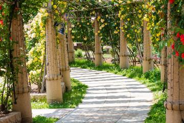 山梨県北杜市 ハイジの村 薔薇の回廊