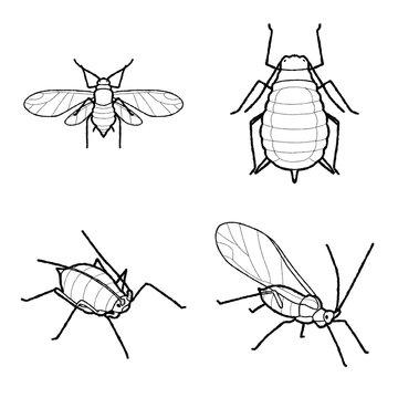 Aphid Animal Vector Illustration Hand Drawn Cartoon Art