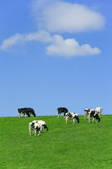牛と青空背景テクスチャ