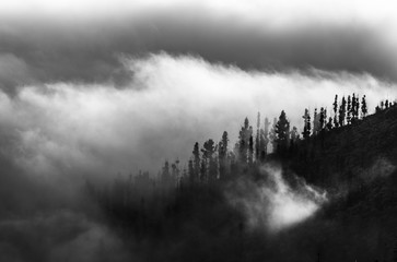 Poster Morning with fog Teide National Park, Tenerife island, Canary islands, Spain, Europe