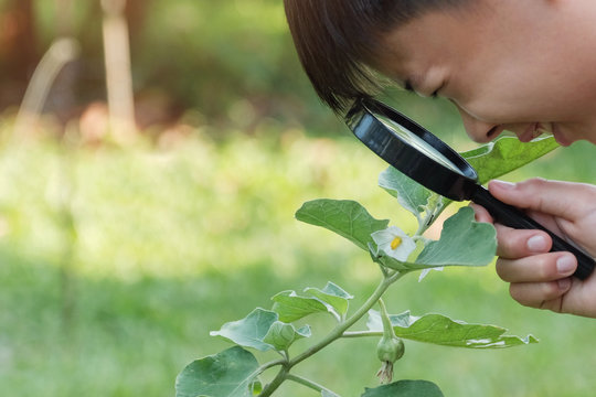 Close up of Asian boy looking at leaves through a magnifying glass, montessori natural learning homeschool education, Plant pathology