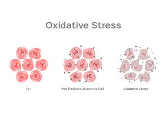 Fototapeta Oxidative Stress cell vector / free radical obraz