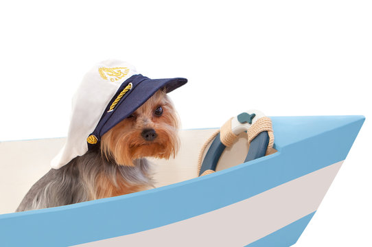 The dog in the captain's cap sits in the boat. Isolated on white background.