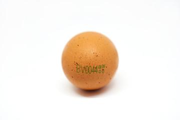 Egg on white background.