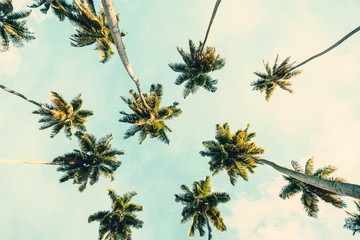 Wall Mural - Summer tropical background with Coconut palms  on  blue sky. Toned image.