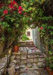 Fototapete - Old narrow street with flowers in Plaka district, Athens, Greece. Plaka is one of the main tourist attractions of Athens. Scenic beautiful alley like overgrown tunnel in the Athens city center.