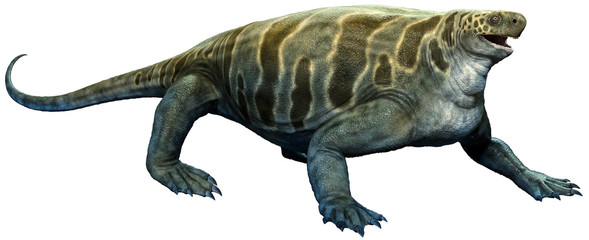 Wall Mural - Cotylorhynchus from the Permian era 3D illustration