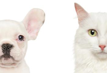 Puppy and Kitten half face