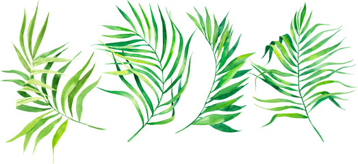 Watercolor illustration set of tropical leaves. Coconut palm leaves. Dense jungle. Banner with exotic summertime motif.