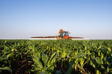 Fotomurales - Tractor spraying corn field