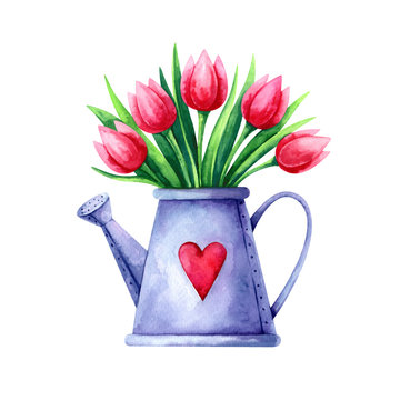 Hand painted watercolor illustration of bouquet of red tulips in a watering can isolated on white background