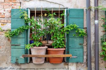 Italian window with plants