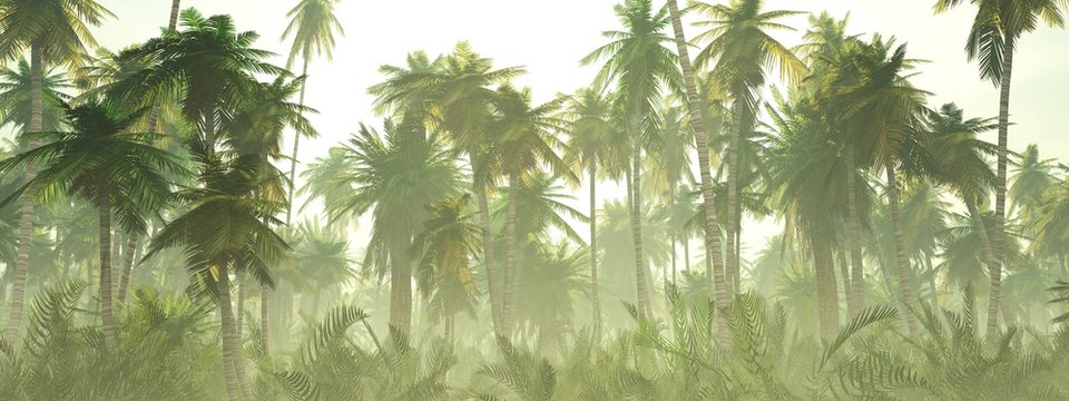 Jungle in the fog at sunrise, palm trees in the haze