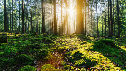 Tranquil scenery in a green forest, with the sun casting enchanting rays of light through the trees