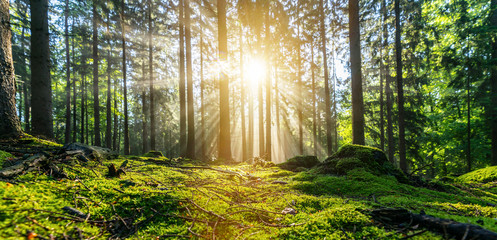 Foto op Aluminium Grijze traf. Panorama of a beautiful forest at sunrise