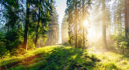Sunrise in a beautiful Misty forest in Germany