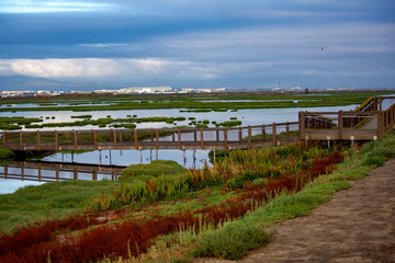 Quiet morning at the wetlands