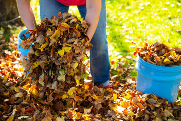 dispose fall leaves