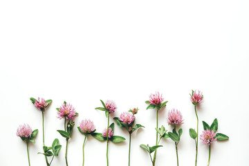 Pink clover flowers on white background.