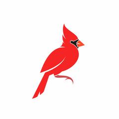 Northern cardinal. Cute bird. Crimson cardinal on white background