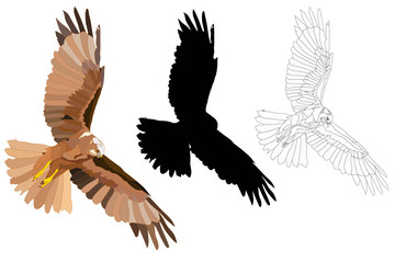 Bird of prey. Flying bird. Bird landing. Vector image. White background.