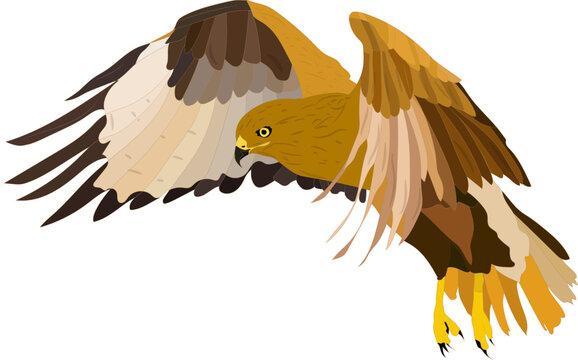 Bird of prey. Flying bird. Bird landing. Vector image. White background.