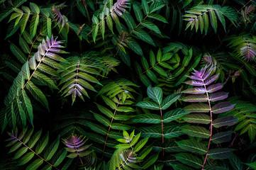 natural leaf pattern