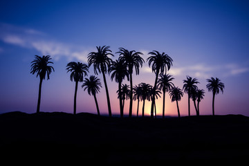 Tropical palm coconut trees on sunset sky nature background. Silhouette coconut palm trees on beach at sunset