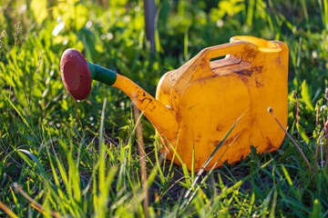Yellow watering can in the garden