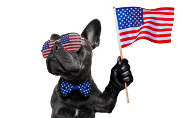 Self adhesive Wall Murals Crazy dog independence day 4th of july dog