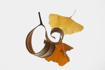 秋の落ち葉のアップ写真