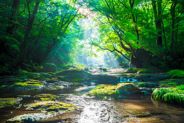 Aluminium Prints Forest river Kikuchi valley, waterfall and ray in forest, Japan